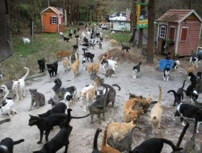 is this the cat heaven 11