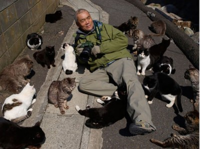 is this the cat heaven 12