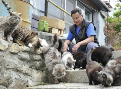 is this the cat heaven 9