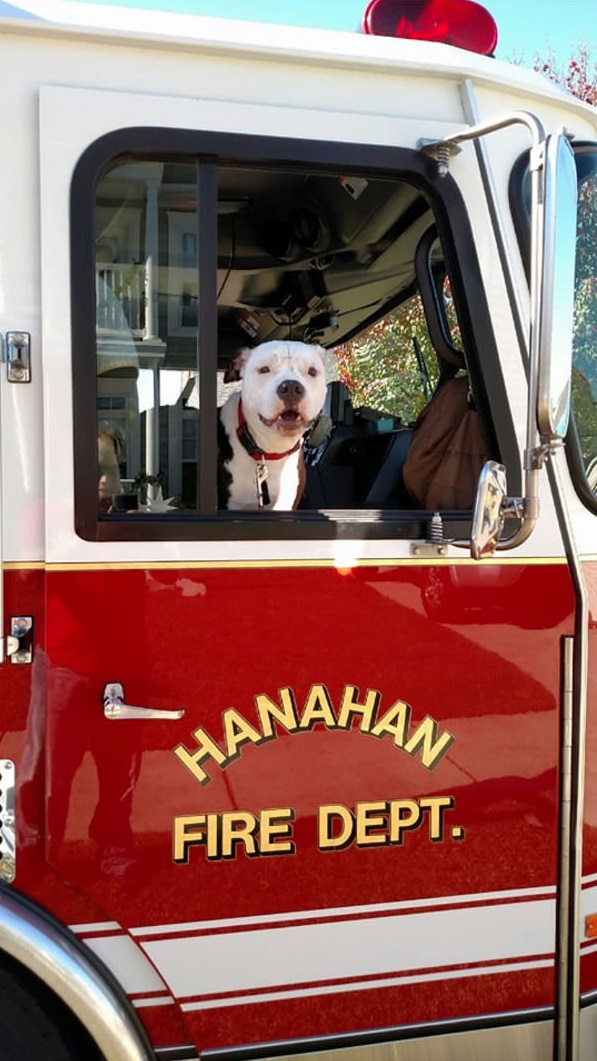 jake is the most adorable member of hannah fire department 10 pictures 10