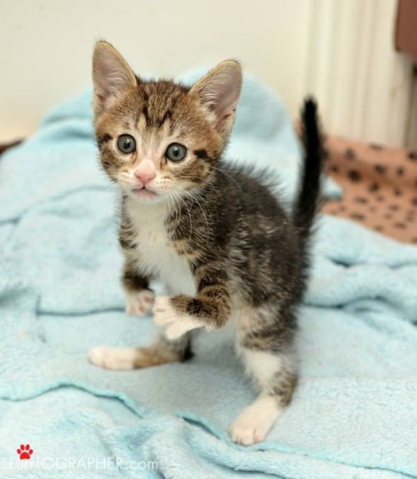 kanga roo the bravest little kitty 8 pictures 1