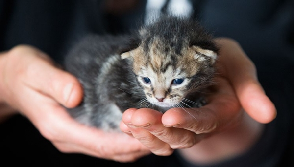 kitten saved from chimney is grateful cat today  13 pictures 1