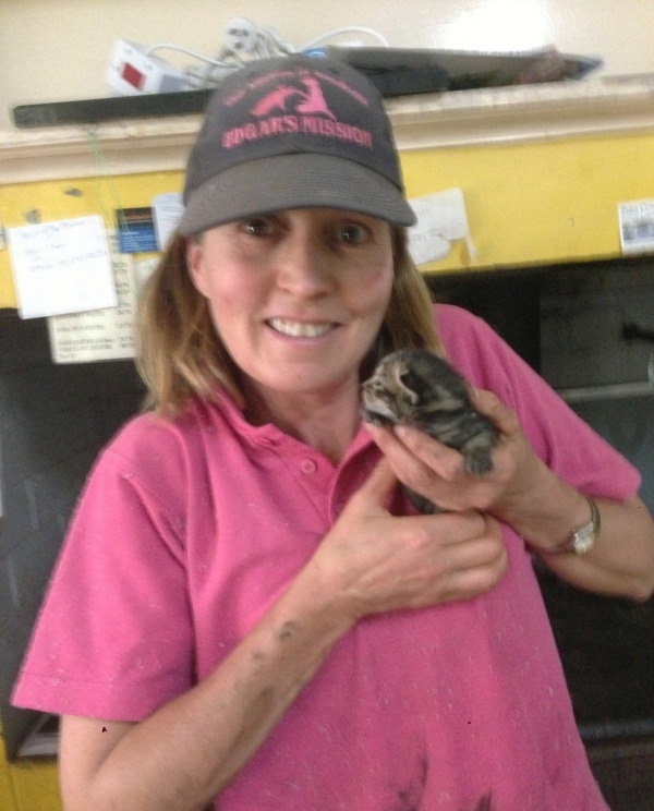 kitten saved from chimney is grateful cat today  13 pictures 3