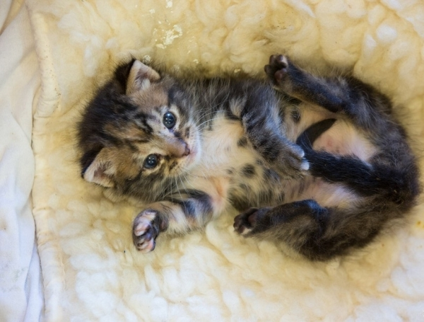 kitten saved from chimney is grateful cat today  13 pictures 5