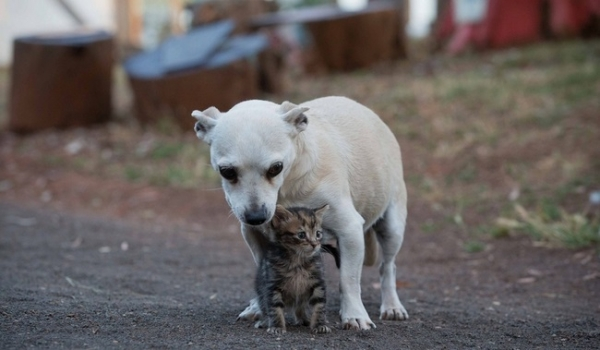 kitten saved from chimney is grateful cat today  13 pictures 7