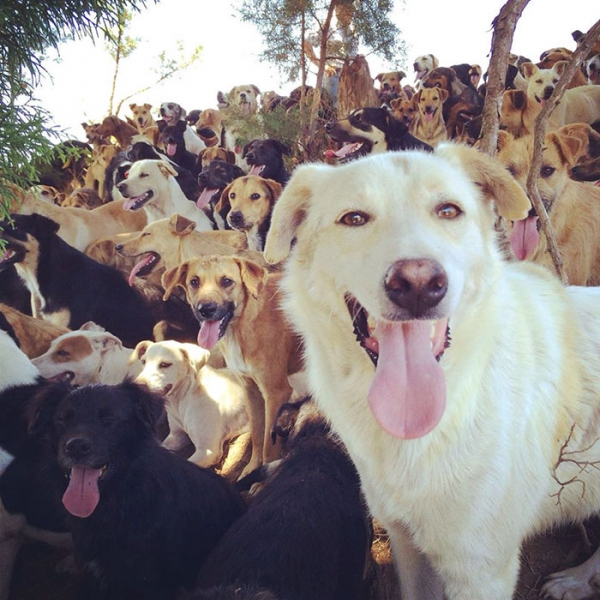 land of strays is the place to visit 9 pictures 9