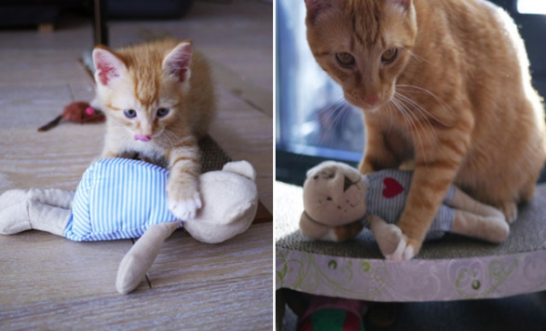 lifelong friendships between pets and their toys 10 pictures 2