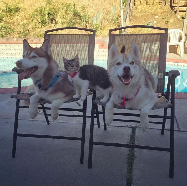 lilo the husky saves 7