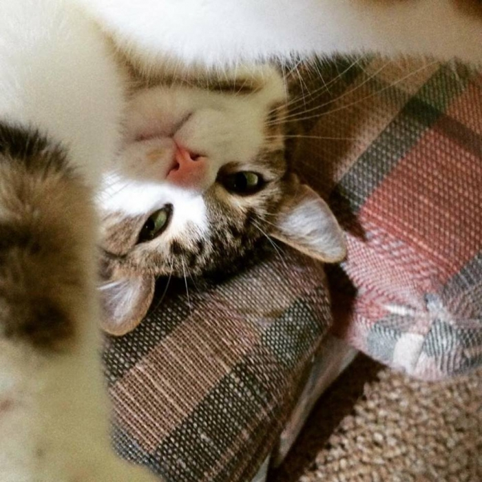 Author: Michele Mulder, Description: Upside down catty selfie