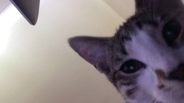 Author: Tamika Louise, Description: Course for catty selfies needed