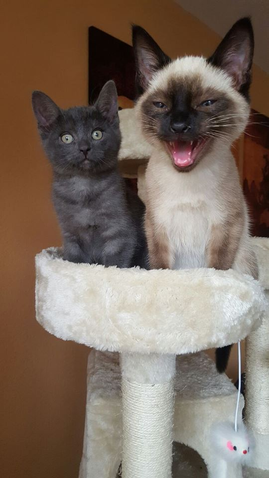 Author: Jasmin Neujahr, Description: A sweet and beautiful cat duet