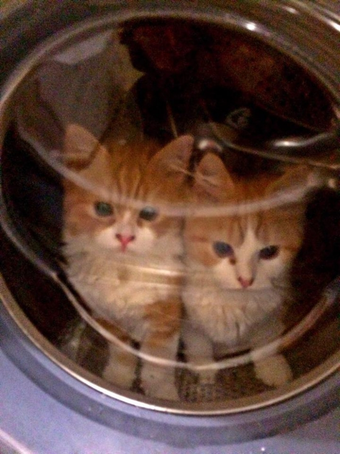 Author: Spencer Bailey, Description: Two cats sit in washing machine which is, of course, a joke