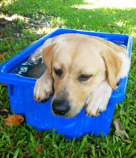 Author: Hannah Murchie, Description:A dog with very nice champagne colors bathing in a small blue tub