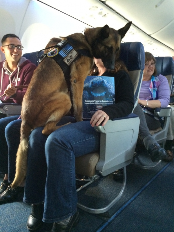 lovely moments on the plane 9 pictures 3 gifs 5