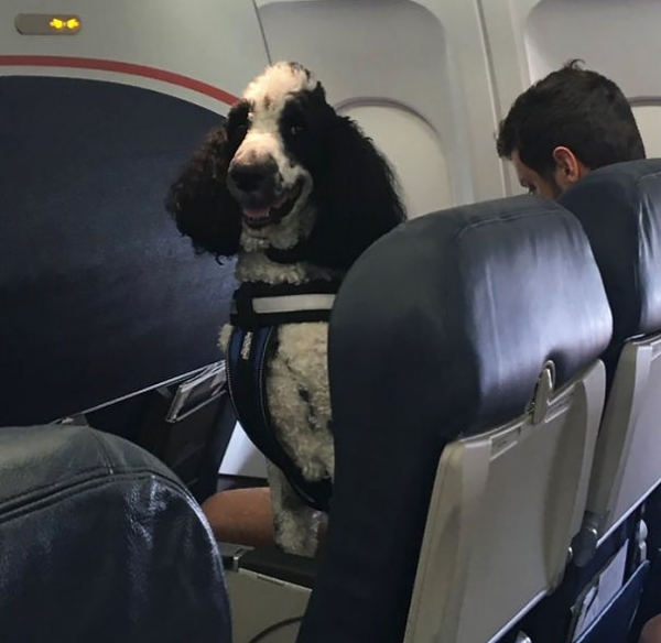 lovely moments on the plane 9 pictures 3 gifs 8