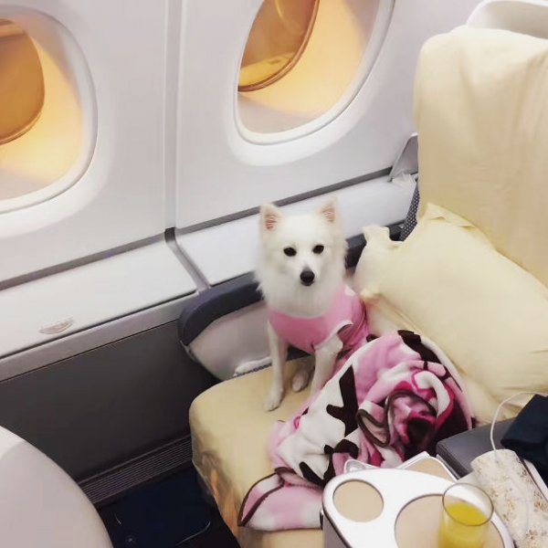 lovely moments on the plane 9 pictures 3 gifs 9