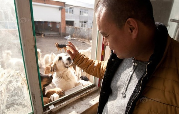 man who spent millions to save hundreds of dogs 13 pictures 10