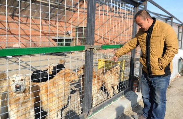 man who spent millions to save hundreds of dogs 13 pictures 11