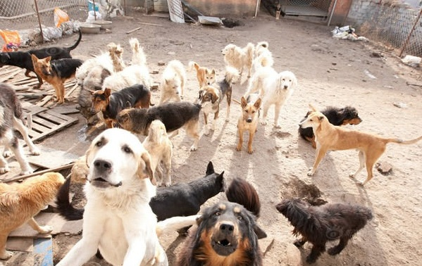 man who spent millions to save hundreds of dogs 13 pictures 12