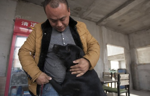 man who spent millions to save hundreds of dogs 13 pictures 3