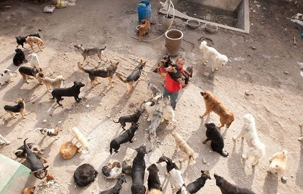 man who spent millions to save hundreds of dogs 13 pictures 5
