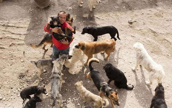 man who spent millions to save hundreds of dogs 13 pictures 6