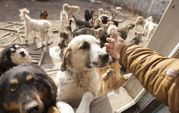 man who spent millions to save hundreds of dogs 13 pictures 7