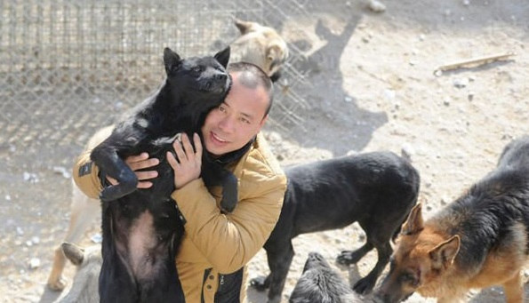 man who spent millions to save hundreds of dogs 13 pictures 9
