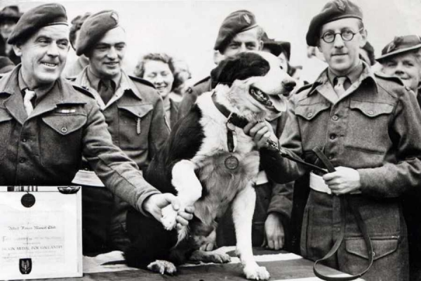 medal of honor for our animal friends 10 pictures 3