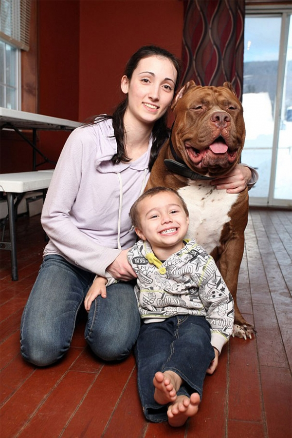 meet hulk one of the largest pitbulls out there 12 pics 4