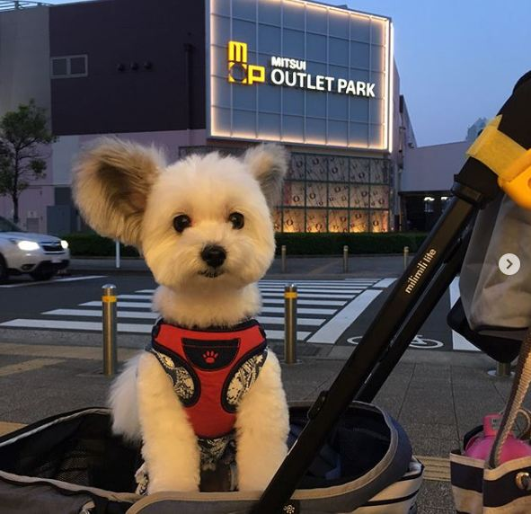 meet the brightest star of instagram the puppy goma 3