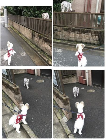 meet the brightest star of instagram the puppy goma 5