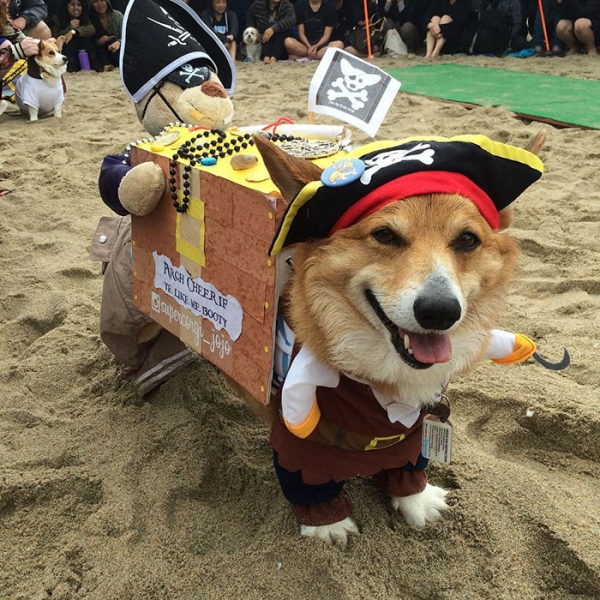 most adorable beach event featuring 600 corgis corgchella 17 pictures 11