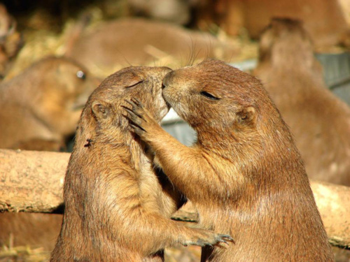 Most amazing examples of monogamy in animal world 12 pictures.
