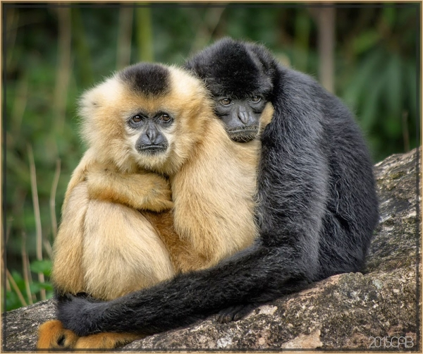 10 examples of monogamy in the animal kingdom.