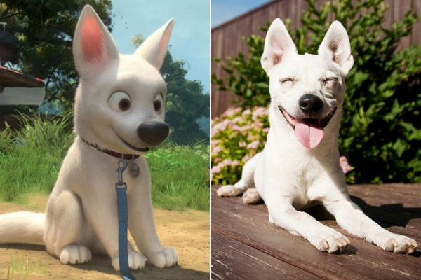 movies that could influence on your dog choice 15 pictures 12
