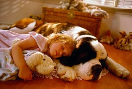 movies that could influence on your dog choice 15 pictures 3