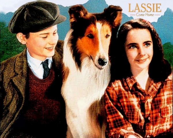 movies that could influence on your dog choice 15 pictures 7