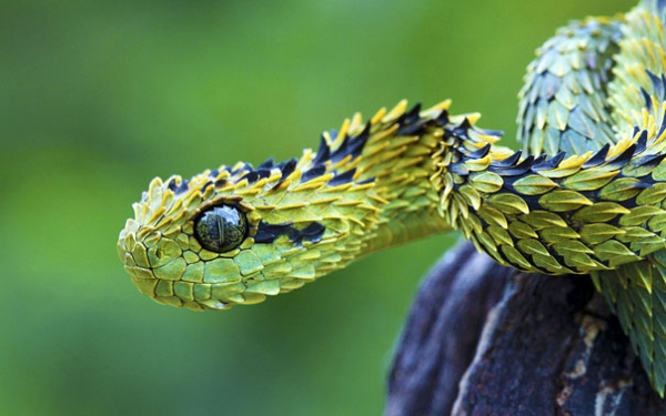 natures creativity is truly boundless 11 animals that not many people knew existed 7