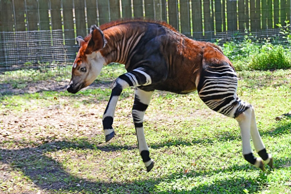 natures creativity is truly boundless 11 animals that not many people knew existed 9