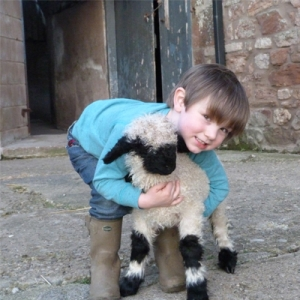 next time you count sheep to fall asleep think of valais blacknose sheep 11 pictures 9