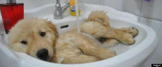 not all animals hate bath time 15 pics 1 video 12