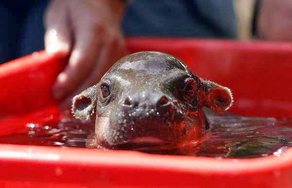not all animals hate bath time 15 pics 1 video 5