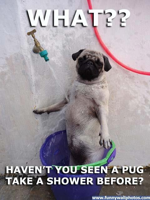 not all animals hate bath time 15 pics 1 video 9