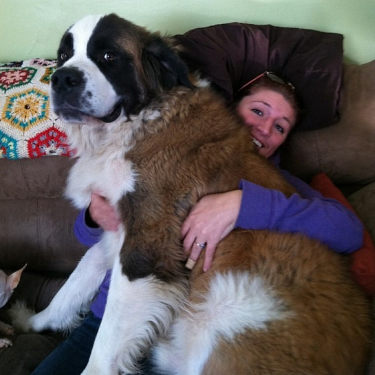 once a lap dog always a lap dog 19 pictures 16
