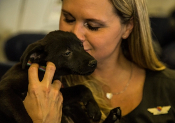 operation pets alive is a resounding success 11 pictures 9