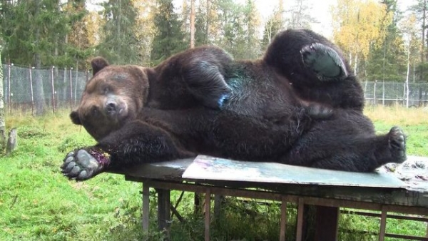orphaned and amazingly talented animal painter juuso the bear 17 pictures 1
