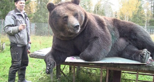 orphaned and amazingly talented animal painter juuso the bear 17 pictures 2