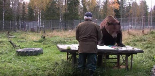 orphaned and amazingly talented animal painter juuso the bear 17 pictures 3