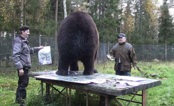 orphaned and amazingly talented animal painter juuso the bear 17 pictures 4